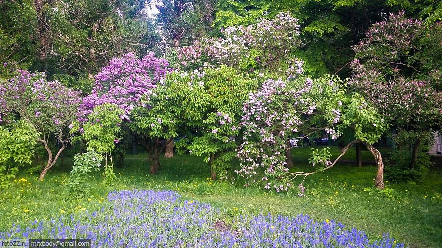 06-LilacGarden
