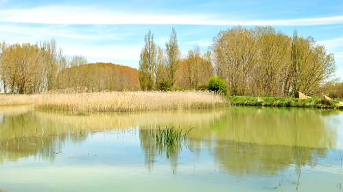 Foreground, Reflections, Frist sluice, Campos branch, The Canal of Castile, Abarca de Campos, Palencia, Spain