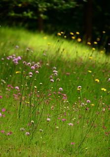 Floweristicism