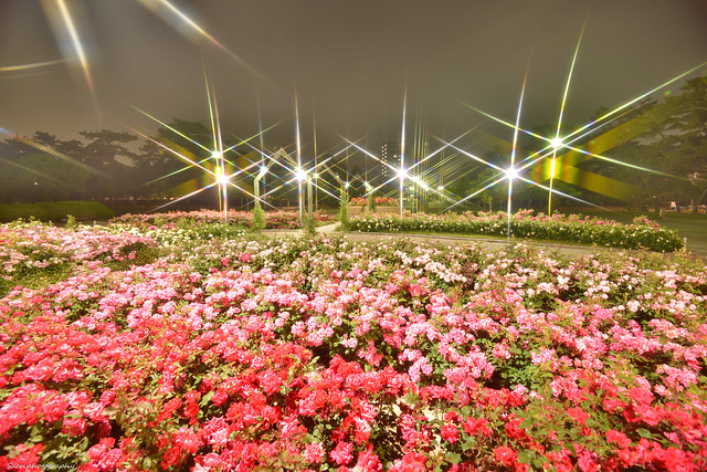浜寺公園 #15