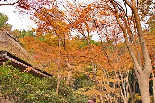 【写真】2012 紅葉 : 祇王寺/2021-09-05/IMGP7864
