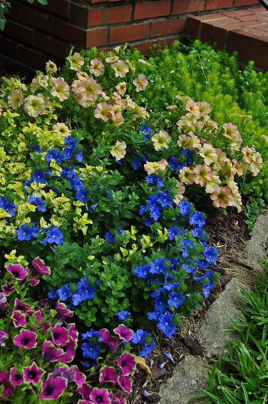 MacKinlay Garden (13)