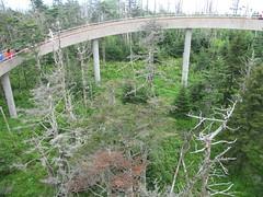 outdoor structure(0.0), suspension bridge(0.0), rope bridge(0.0), rolling stock(0.0), track(0.0), canopy walkway(1.0), bridge(1.0),