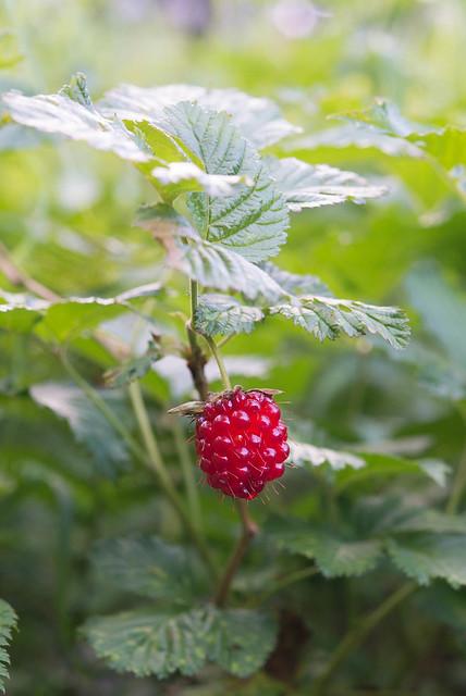 Raspberry?