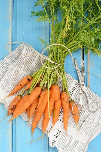 carrot.12