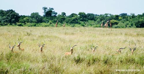 Kenia - Masai Mara 44