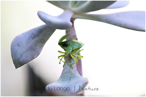 Balancing by Wendy Longo photography