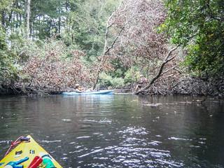 South Edisto River-103