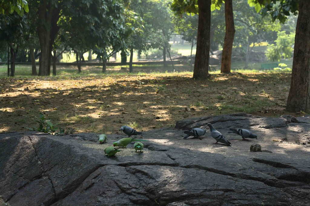 Delhi's Bandaged Moments – John Keats, Nehru Park