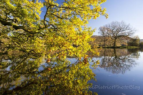 ウィンダミア湖畔の秋