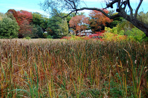 Arnold Arboretum (by: Chris Devers, creative commons)