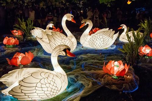 Beautiful Swan Lanterns.