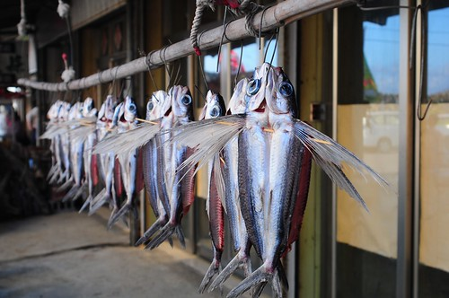 Drying Fish 4