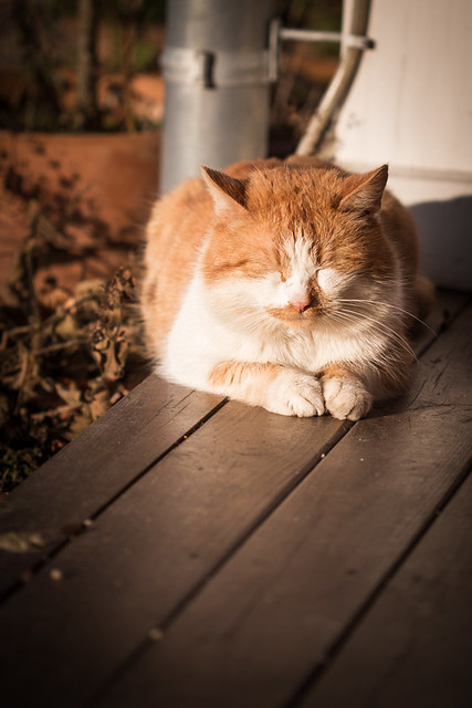 Cat in the Spring Evening Sun