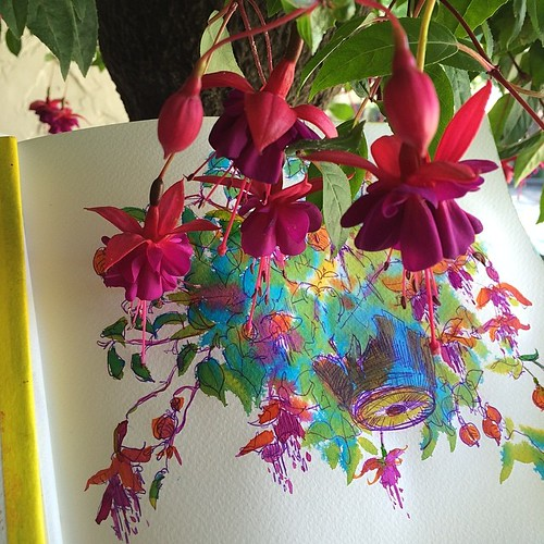 #sketchbook #fuchsia