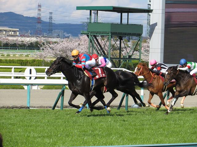 キズナ - 第58回産経大阪杯 / Kizuna - Hanshin Racecourse