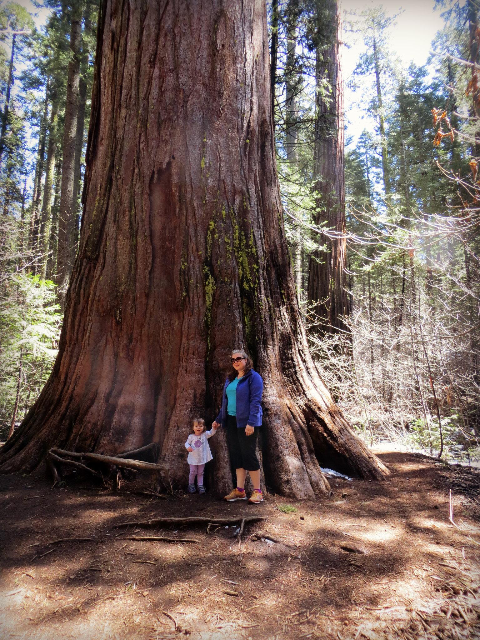 Big Trees 4