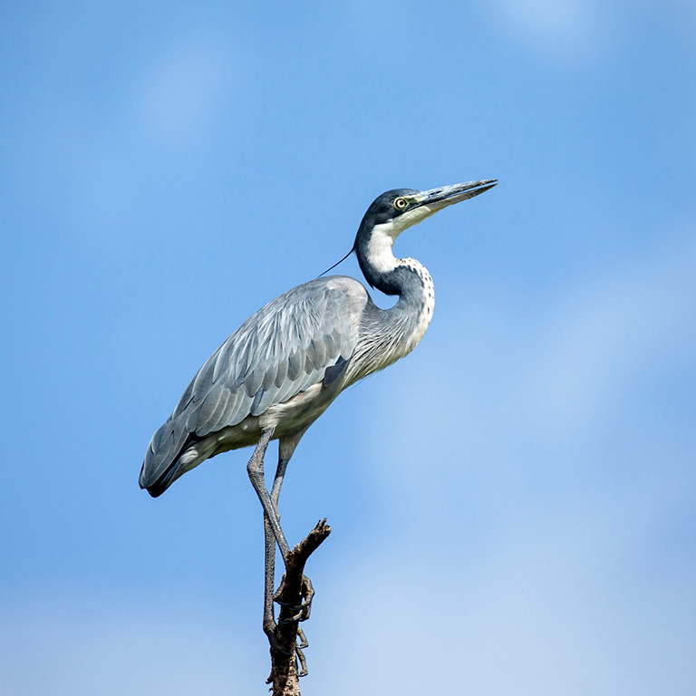 Perched on the Masai Mara. Shot taken about midday.