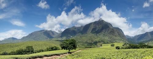 africa panorama terrain plants mountain water waterfall scenery hill malawi mulanje southernregion lujeriteaestate lujeri