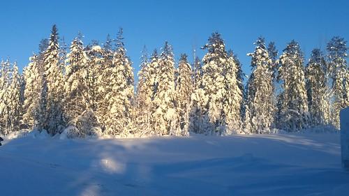 trees sun snow finland blog lapland pureview nokialumia1020