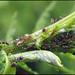 Le royaume des fourmis