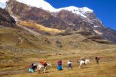 Bergsteigen Bolivien Sechstausender-Trilogie Huayna Potosí, 6088 m, Illimani, 6460 m, Nevado Sajama, 6542 m, Cerro Austria, Pequeno Alpamayo