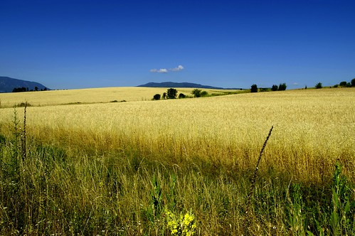 sky field landscape outdoor sommer wheat bulgaria