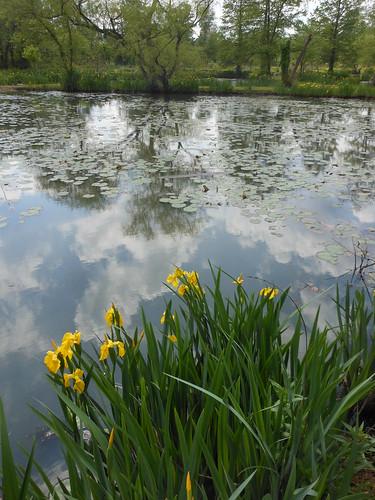 Kenilworth Aquatic Gardens Lanahj
