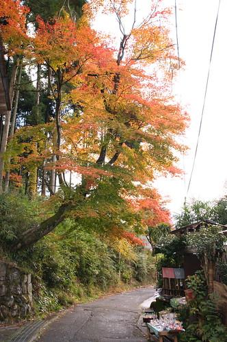 【写真】2012 紅葉 : 寂光院/2020-08-29/IMGP6334