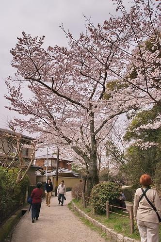 【写真】2013 桜 : 哲学の道/2018-12-24/IMGP9196