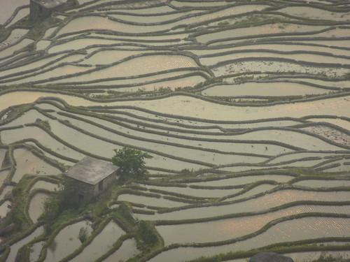 Yunnan13-Yuanyang 24-Bada (65)
