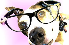 glasses, eyewear, vision care, goggles, illustration,