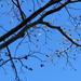 Lua e céu azul