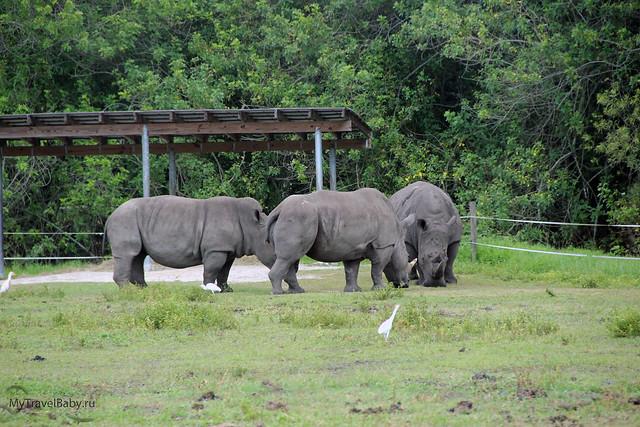 safari018