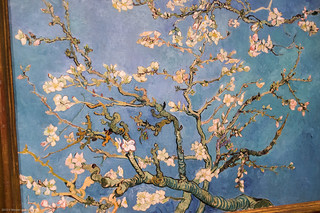 Close up of Almond Blossoms