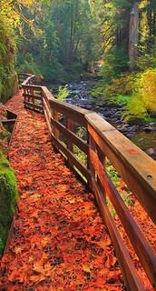 Sweet Creek Trail in Mapleton, Oregon