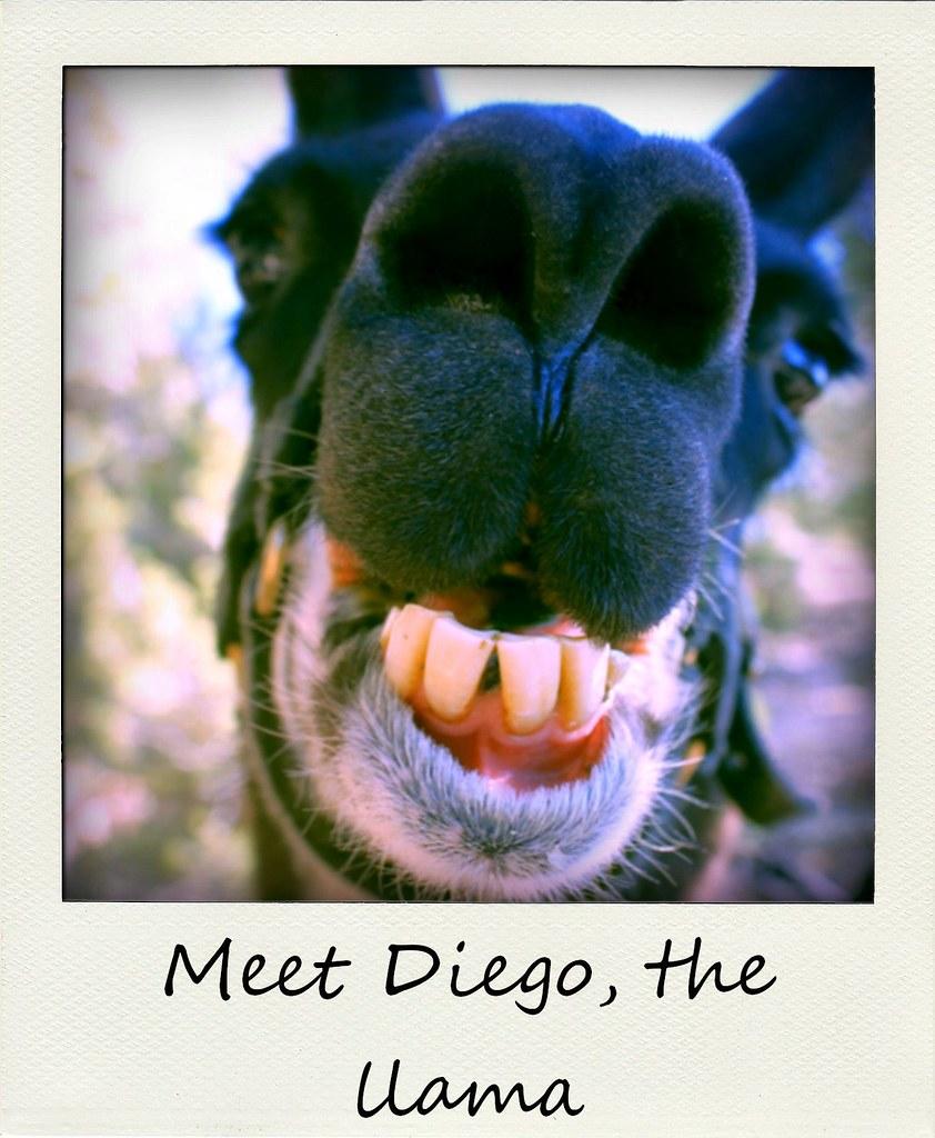 polaroid of the week New Mexico Diego llama trek