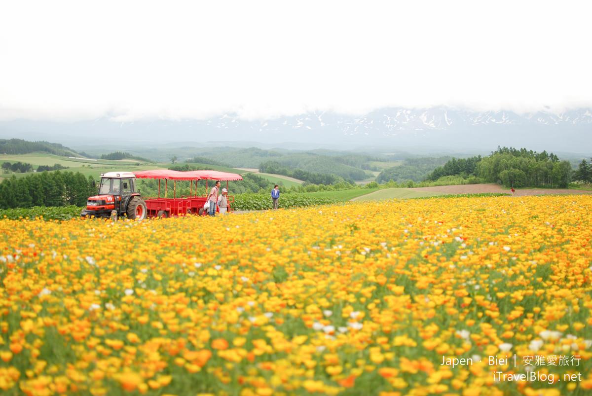 《北海道自驾游》美瑛四季彩之丘:早春的多彩花田初绽放。(上)