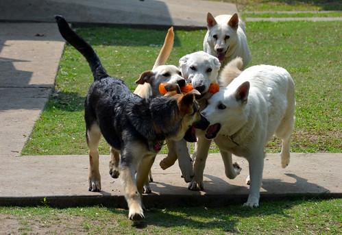 Playin fetch is a team sport