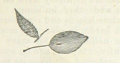 "British Library digitised image from page 227 of ""History of Vermont, natural, civil, and statistical"""