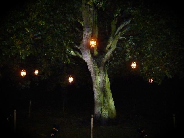 kew-gardens-after-dark-1