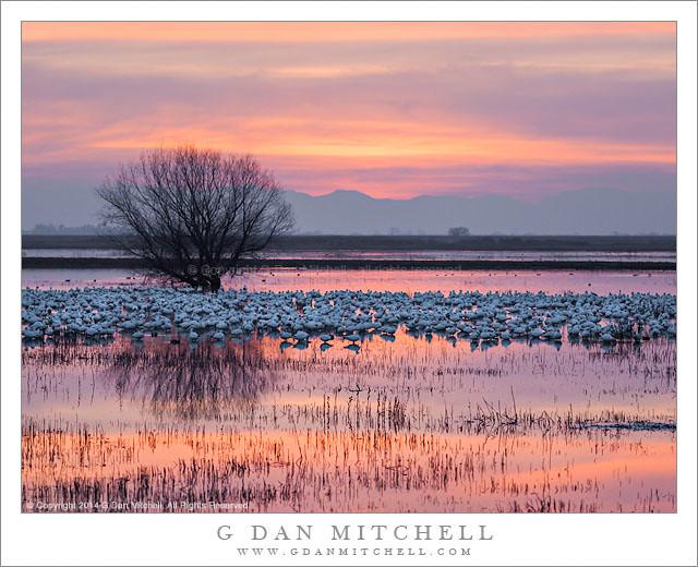 Geese, Wetlands, Dusk Sky