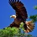 Really Close Eagle (20120611-144811-PJG) by DrgnMastr