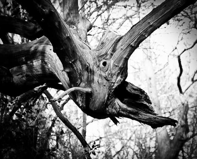 L'arbre-monstre