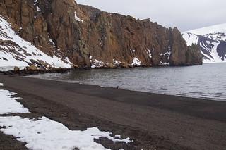 350 Deception Island - Whalers Bay kinbandpinguin