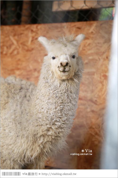 【彰化景點】克林姆莊園Cream Manor~小型動物園!戶外親子同遊好去處44