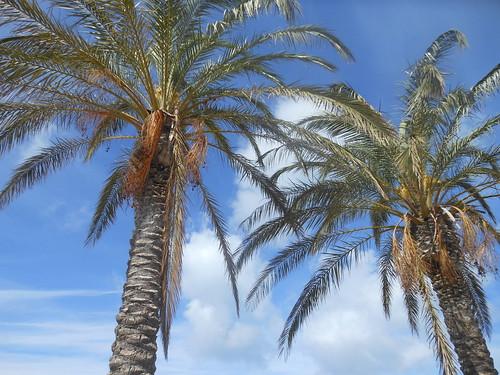 Le palme sulla spiaggia