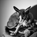 Sur le qui-vive! / On the alert! (Leica Nocticron 42.5mm f/1.2) by Mad Blike