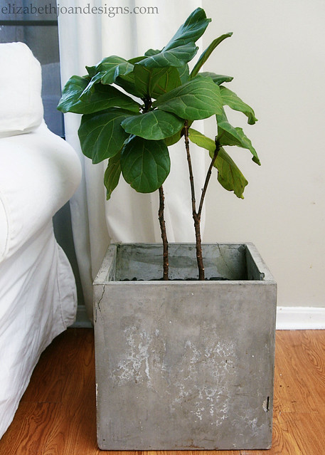 Concrete Planter Plant