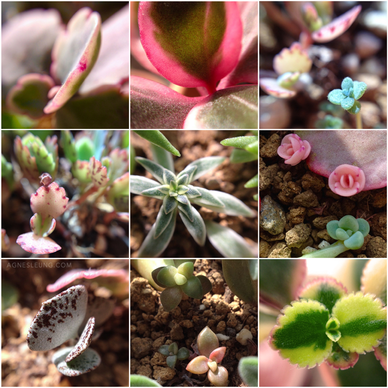 jan-succulents-2015-3